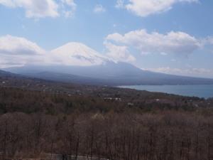 Sakura&MtFuji (2).jpg