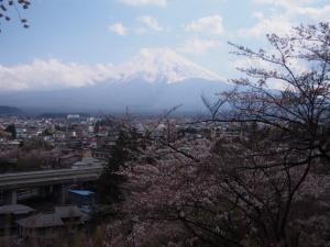 Sakura&MtFuji (3).jpg