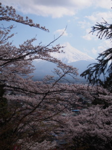 Sakura&MtFuji (4).jpg
