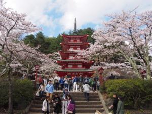 Sakura&MtFuji (6).jpg