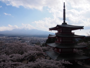 Sakura&MtFuji (8).jpg