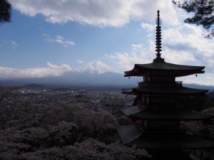 Sakura&MtFuji (9).jpg
