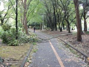Typhoon#5_2017.jpg