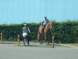 街中の馬.jpg